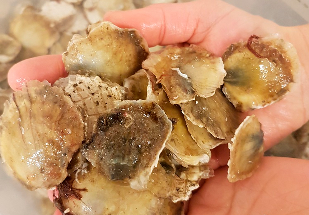IV.-Existing shellfish species: oysters and mussels