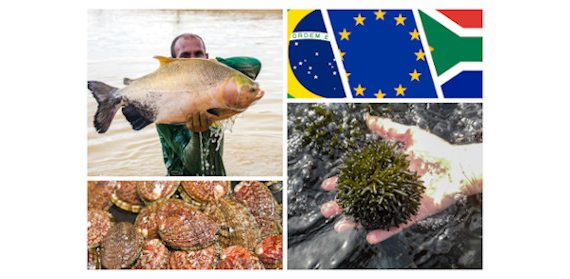 Photos in collage: Jefferson Cristiano Christofoletti (man with tambaqui), Sylvain Huchette (abalone), ALGAplus (algae).