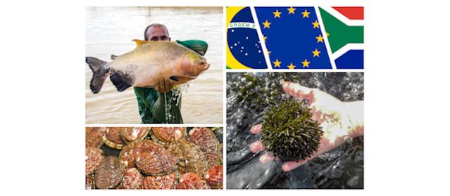Photos in collage: Jefferson Cristiano Christofoletti (man with tambaqui), Sylvain Huchette (abalone), ALGAplus (algae).