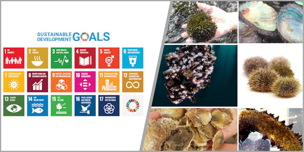 Survey on SDGs and low-trophic aquaculture.