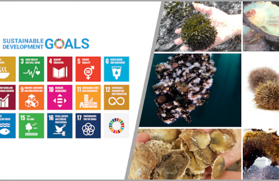 Survey on SDGs and low-trophic aquaculture.