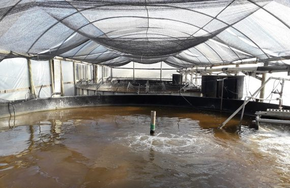 Tanks for the culture of shrimp using biofloc technology at the Marine Shrimp Laboratory of the Federal University of Santa Catarina (UFSC), Florianópolis, Brazil. Photo by Mateus Aranha Martins