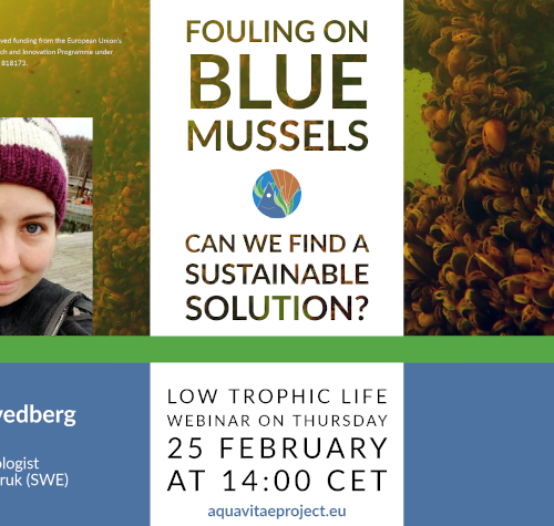 "Low Trophic Life Webinar: ""Fouling on blue mussels"""