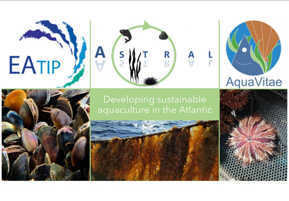 Developing Sustainable Aquaculture in the Atlantic